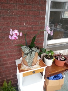 An orchid blooming on the porch.