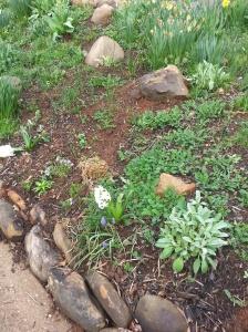 ...and hyacinths
