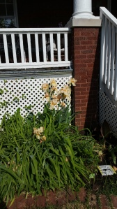 The tall Iris will eventually be replaced by the tiger lilies